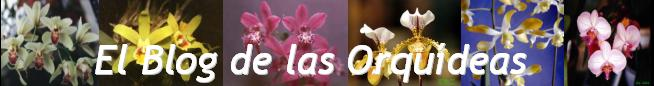 El Blog de la Orqudeas